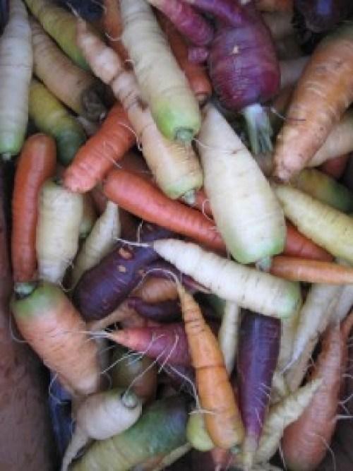 Carrot_wonderland