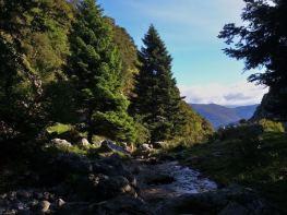 Ελατοδάση Ερυμάνθου και ποταμός Πείρος στο μονοπάτι για Κεντριά