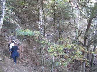 Περπατώντας στο δάσος, διαδρομή Νυμφασία - Μαγούλιανα