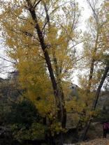 Φθινοπωρινά χρώματα στο Μαίναλο
