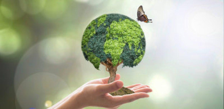 Como cuidar do meio ambiente