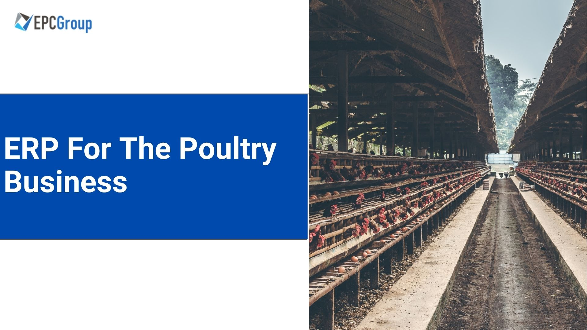 What Is The Best ERP Software For The Poultry Business? - thumb image