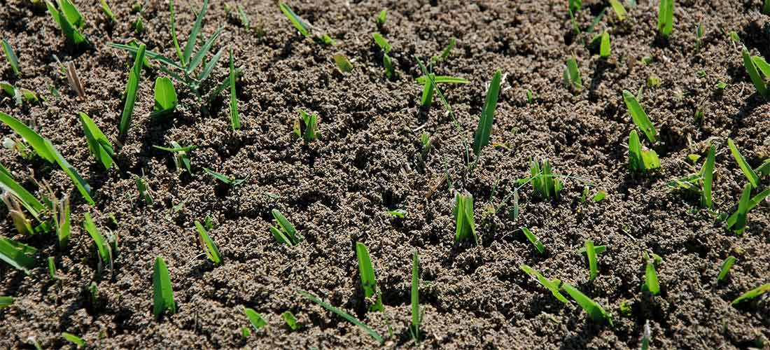 Fire Ants Get Rid Of Fire Ants Epestsupply Articles