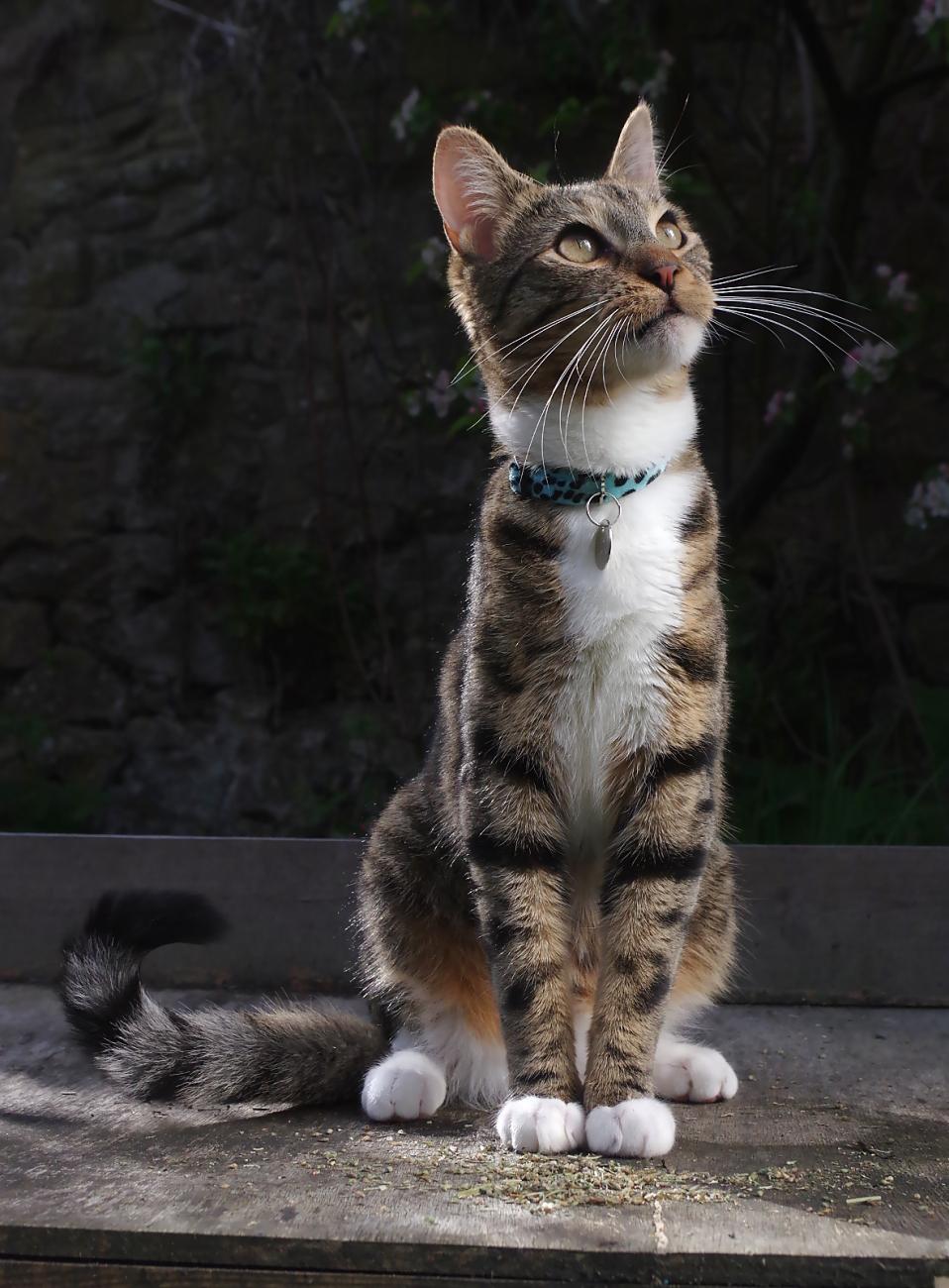 Posing Cat By Turniptowers Ephotozine