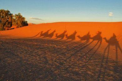 desert caravan shadow