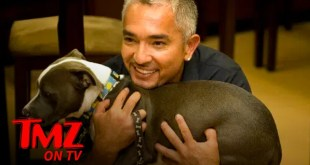 Cesar Millan Says Dogs Will Experience Separation Anxiety When People Go Back To Work | TMZ