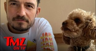 Orlando Bloom Destroyed Over Lost Dog | TMZ