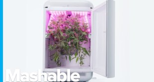Futuristic Cannabis Farming is Here