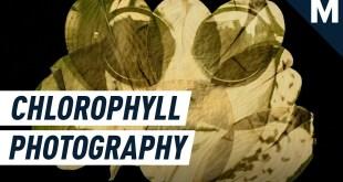 This Photographer Imprints Historic Photographs Onto Leaves | Mashable