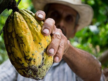 Has antioxidants found in cocoa beans
