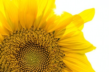 sunflower seeds are high in vitamin E