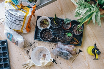 Cultivate your green thumb