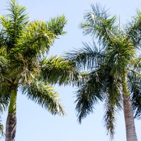 Five Things To Do In Naples, Florida