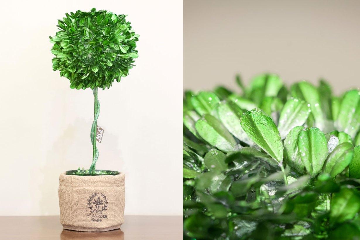 Διακοσμητικό φυτό