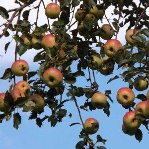 EPL de Haute-Corrèze pommes ferme du Manus