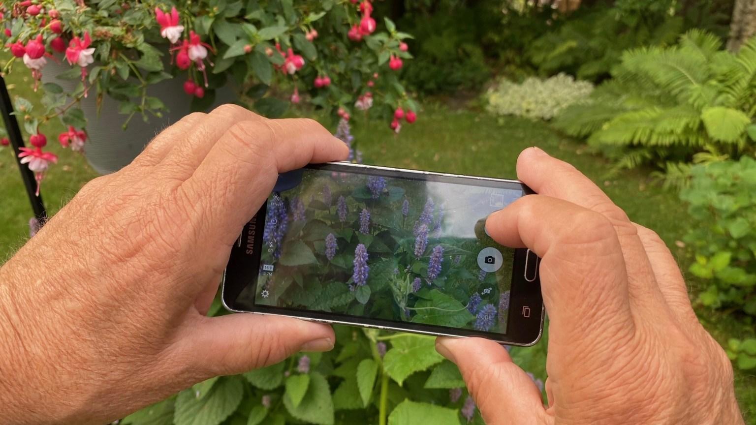 c/u of phone video cam of flowers