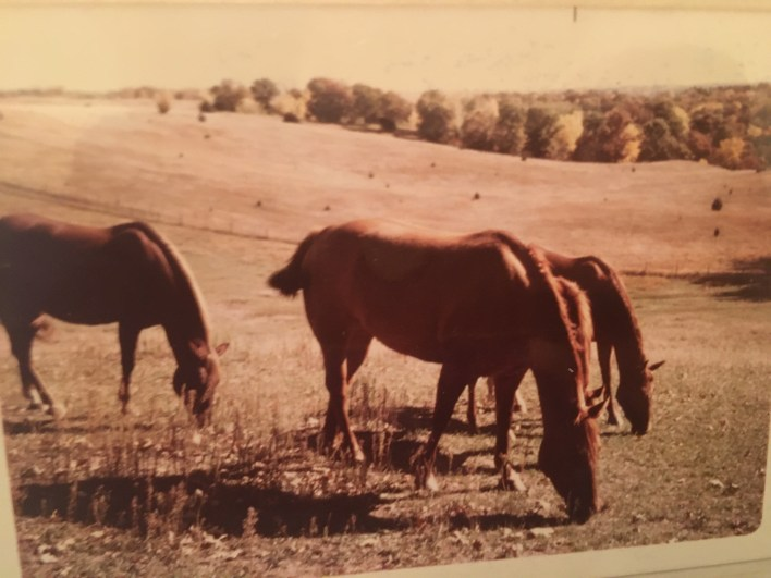 A view of several horses on Dave Brown's farm.