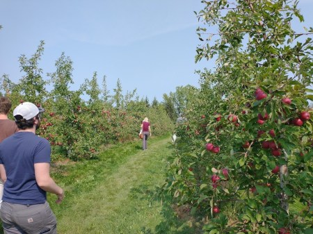 People amble through an apple orchard