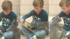 Menino tenta ler livro, mas gato quer sua atenção, veja o que acontece