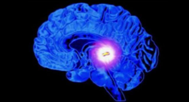 Tief verborgen im Inneren des Gehirns – die Zirbeldrüse hat eine den Augen ähnliche Struktur.