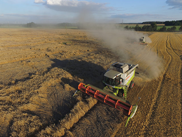 DAHNSDORF, GERMANY - AUGUST 17: In this aerial view combines harvest wheat on a field on August 17, 2016 near Dahnsdorf, Germany. The summer grain harvest is drawing to a conclusion across Germany and while some farmers have reported poor quality due to the hot summer others are reporting a strong harvest both in quality and quantity. However many farmers claim they are struggling due to low grain prices. (Photo by Sean Gallup/Getty Images)
