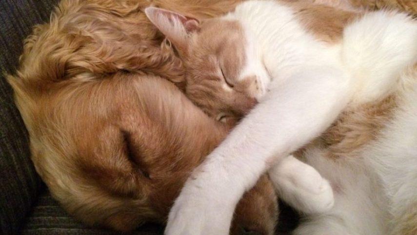 Bien-être animal: un permis sera nécessaire pour détenir un animal en Belgique à partir du 1er janvier