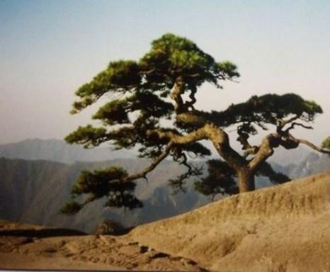 Горы Хуаншань («Жёлтые горы»). Фото: secretchina.com