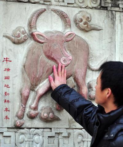В пекинском монастыре Байюн люди прикладывают руку к изображению быка. Считается, что это принесёт им счастье в год Быка. Фото: Getty Images