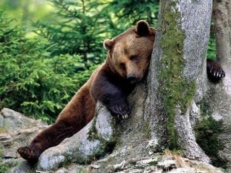 Обаяние животного мира. Фото с secretchina.com