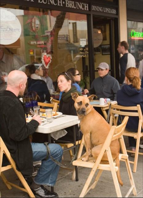 Собака с хорошими манерами смотрит на прохожих, сидя в кафе «У Джуди» со своими хозяевами. (Catherine Karnow)