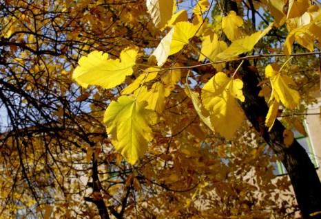 Здравствуй, госпожа Осень. Фото: Ирина Рудская/Великая Эпоха