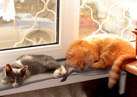 Тихон любил лежать на подоконнике, и Сонька пристроилась рядом. Фото: Ирина Рудская/Великая Эпоха (The Epoch Times)