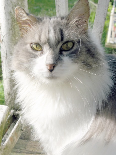 Кошка Маря. Фото: Светлана Корсакова/Великая Эпоха (The Epoch Times)