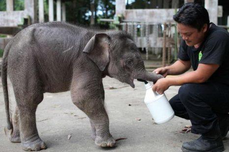 Трёхмесячный карликовый слонёнок Джо находит своего «папу». Фото с сайта bild.de