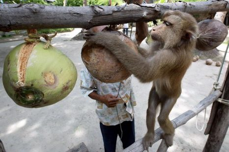 Фото: PORNCHAI KITTIWONGSAKUL/AFP/Getty Images