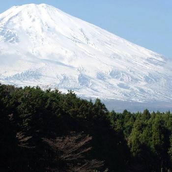 Мрачный лес у подножья Фудзи японцы назвали «Лесом  самоубийц». Фото: Harry How/ALLSPORT/Getty Images