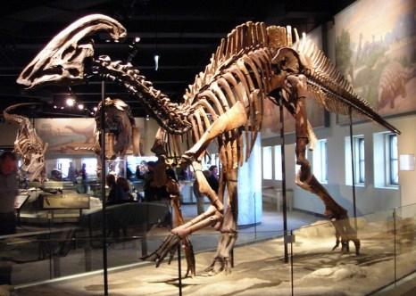Скелет динозавра паразауролофа. Фото: upload.wikimedia.org