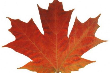 Осенний лист. Фото: Thinkstock Images/photos.com