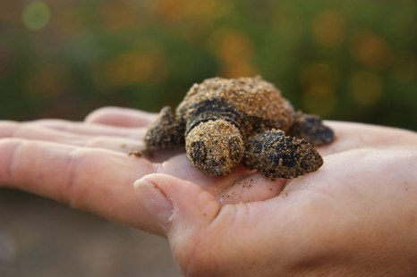 Остров Черепах на безлюдном полуострове Карпасия, Кипр. Фото: Burcin Tuncer/Photos.com