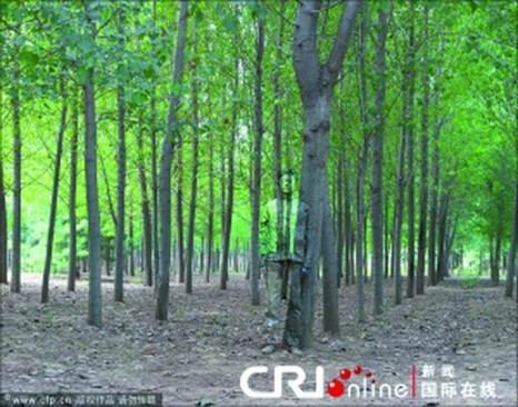 36 летнего китайского художника Лю Болинь называют «невидимкой». Фото:kanzhongguo.com