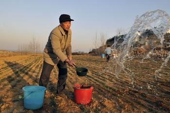 Во многих районах засухи отсутствуют системы орошения и крестьяне поливают пшеницу из вёдер. Провинция Шаньдун. Фото: ChinaFotoPress/Getty Images