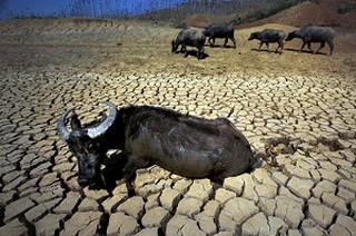 Опустынивание земли в Китае. Засуха в провинции Юньнань. 2010 год. Фото: AFP