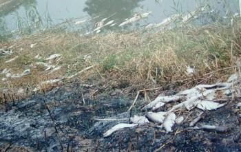 Наносимый экологии ущерб не учитывается при расчёте ВВП. Мёртвая рыба на озере Тайху. Июнь 2010 год. Фото с epochtimes.com