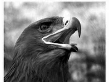 Крестьянин получил возмездие от орла за свою глупость. Фото:epochtimes.com