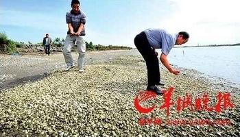В устрицах из провинции Гуандун содержание меди в 740 раз выше нормы. Фото с epochtimes.com