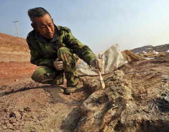 Китай. Археолог на раскопках окаменелости динозавров. Фото: STR/AFP/Getty Images