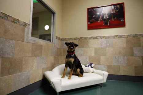 Питомник для собак. Фото: McNew/Getty Images