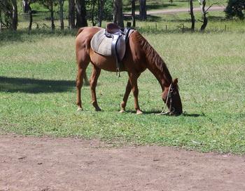 Лошадь. Фото: Екатерина Кравцова/Великая Эпоха