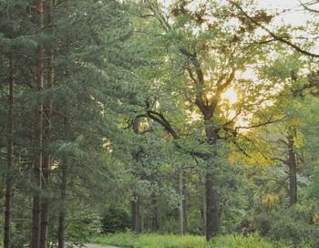 Лес. Фото: Николай Богатырёв