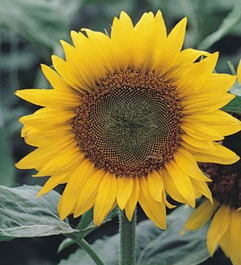 Дарите женщинам цветы со смыслом. Ландыш. Фото с сайта ba-bamail